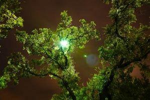 Hva gjør en treet vokse raskere?