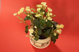 Ideer for å skape et vakkert blomsterpotte