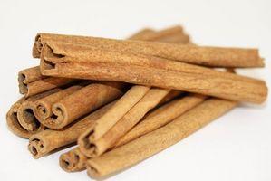 Sykdommer og skadedyr av Cinnamon Tree