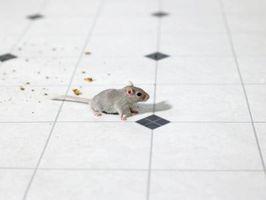Hvordan holde mus ut av en Kitchen Stove