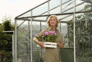 Hvordan å vokse en hage i et drivhus