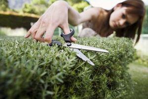 Den beste tiden å trimme trær og busker