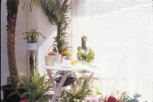 Har en innendørs lys påvirker veksten av en Ficus Tree?