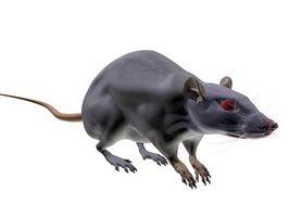 beste mynteplante mot mus