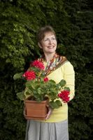 Beste Planter for Patio Hage Pots i Wisconsin