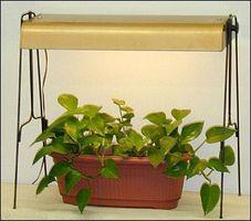 voksende planter med kunstig lys. Black Bedroom Furniture Sets. Home Design Ideas