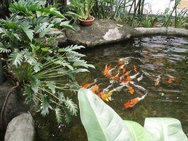 Hvor å Feilfri Pond Filters