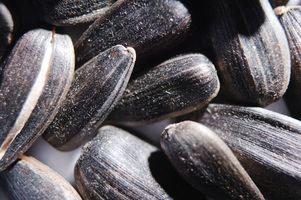 Hvordan Plant Gamle Seeds