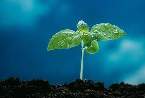 Hva skjer hvis du ikke gjør det Vann Etter plante frø?