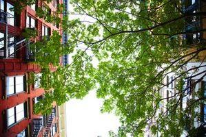 Gjødsel Krav til Urban Trees