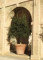 Hvordan Grow Trees in Patio Containere