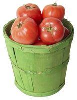 Er det best å plante tomater Tidlig i varmt klima?