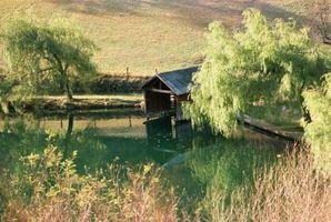 Gjør Weeping Willow Trees Harm Rørlegger?