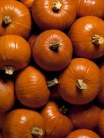 Hvordan Grow Pumpkins på en Trellis Netting
