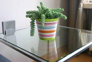 Hvordan Grow Sedum innendørs