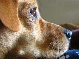 Pet HLR Training