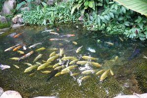 Er Lawn gjødsel Giftige til Pond Fish?