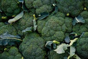 Hvordan Grow Broccoli med lavere gule blader