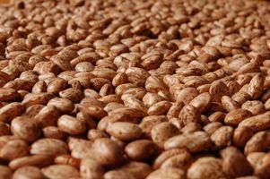 Hvorfor ville mine Bean Seeds Vanish etter planting?