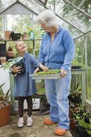Guide til Flower Planting Datoer