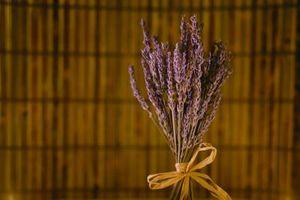 Hvordan Grow Lavendel Vera