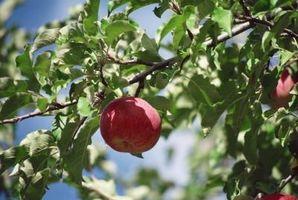 Liste over fruktbærende Planter