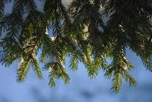 Hvordan kan jeg tjene en Spruce live?