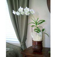 Slik holder Orchids ser vakker