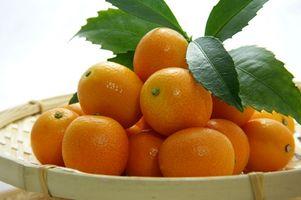 Stell av Dwarf Orange Trees