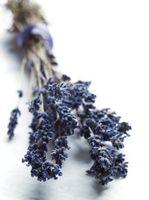 Hvordan bruke Tørkede blomster i Smykker
