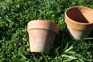 Hvordan Plant frø i en Pot