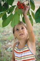 Hvordan lage Organic Fruit Tree Spray